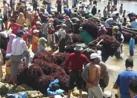 رئيس مصلحة الصيد البحري بالجديدة : الطحالب الحمراء مهددة بالانقراض بسبب جنيها أثناء راحتها البيولوجية