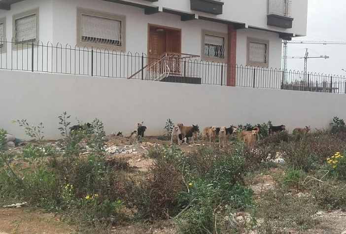قطعان الكلاب الضالة تغزو تجزئة 'وسط الجديدة' والمصالح البلدية خارج التغطية