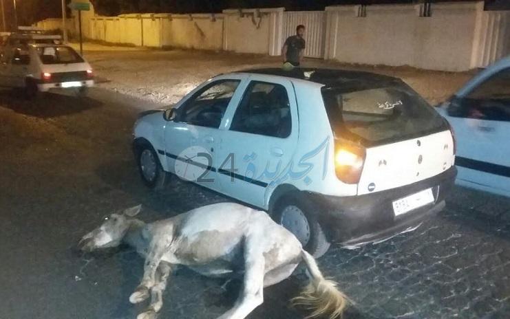 بالصور.. سيارة أجرة تصطدم ببغل في الشارع العام بوسط الجديدة