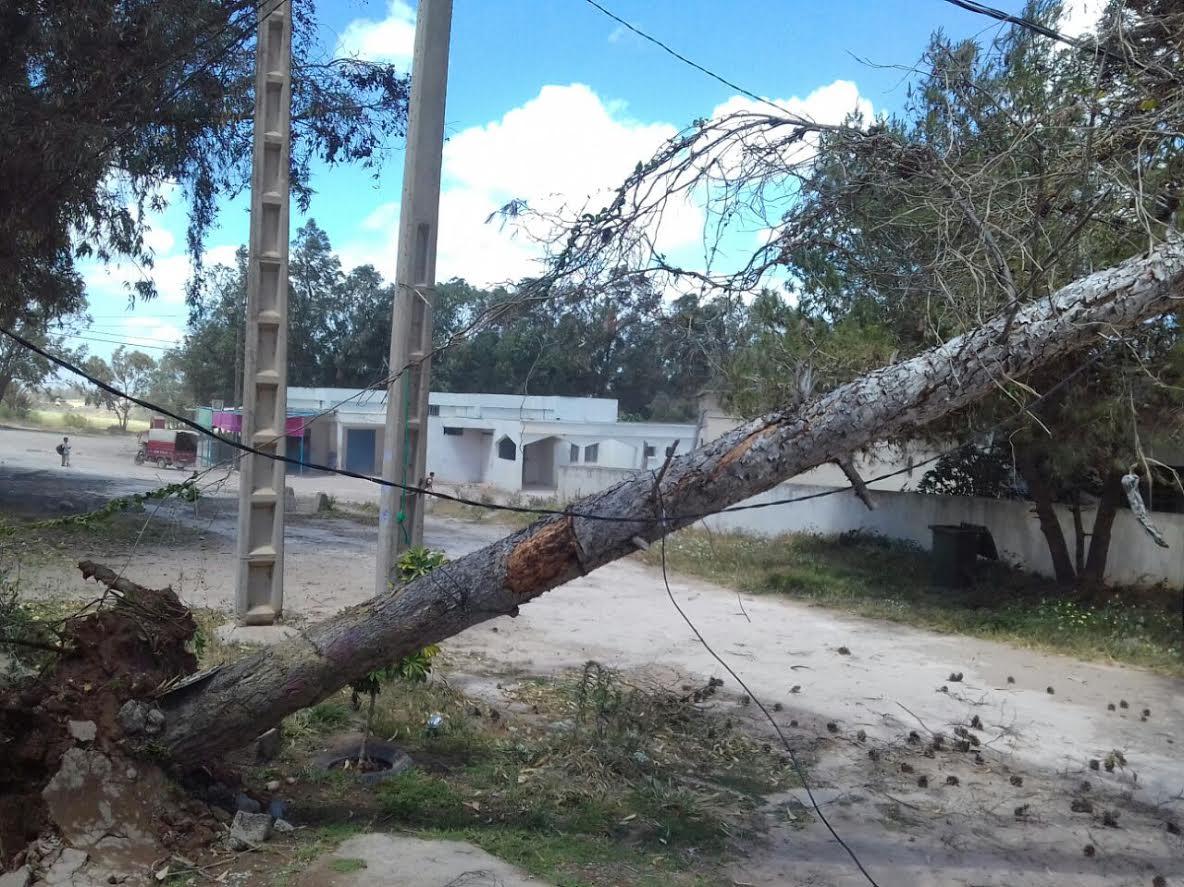 سقوط شجرة على عمود للتيار الكهربائي يثير هلعا بجماعة اولاد رحمون