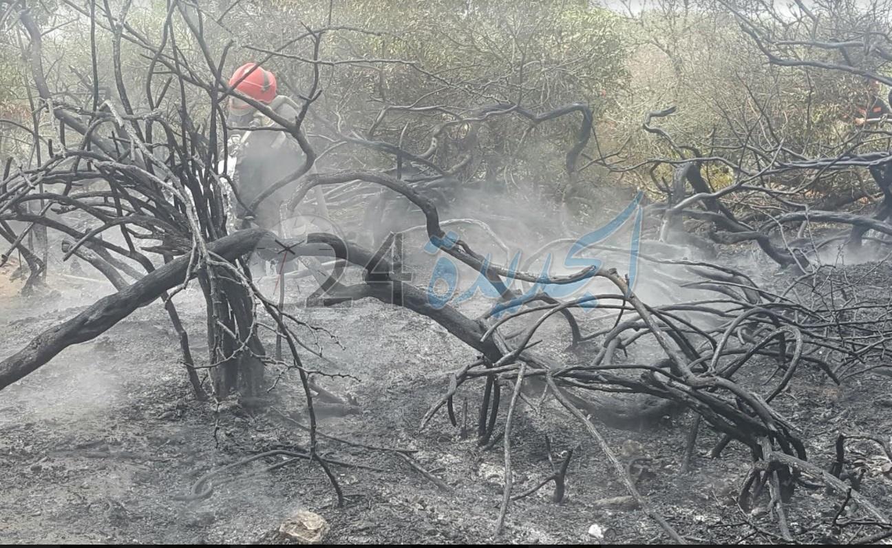 بالصور.. اندلاع 5 حرائق متفرقة بغابة الحوزية واستنفار أمني لتعقب الجناة