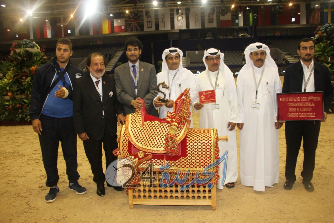 بالصور.. اختتام البطولة الدولية لجمال الخيول العربية الأصيلة  بمعرض الفرس بالجديدة