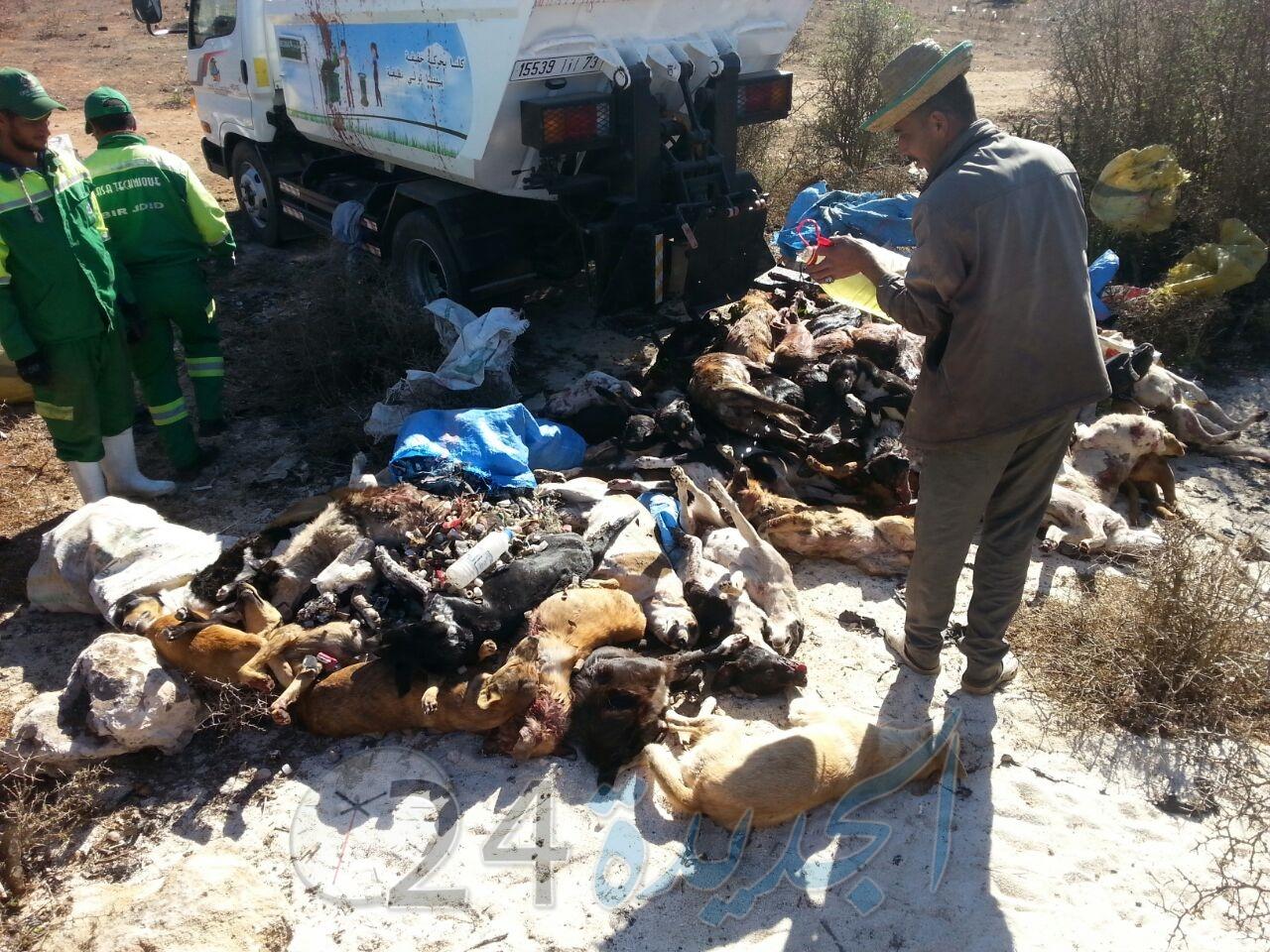 بالصور... السلطات المحلية تعدم 93 كلبا ضالا بمدينة البئر الجديد..