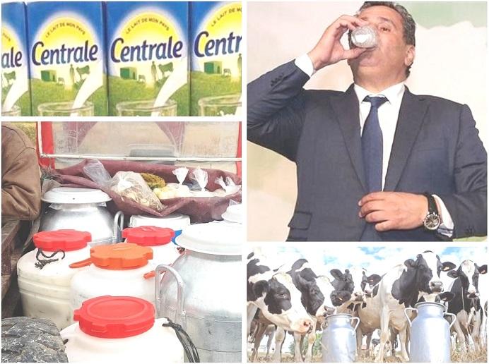 في عز حملة المقاطعة.. الفلاحون في دكالة يتدبرون تسويق إنتاجهم من الحليب