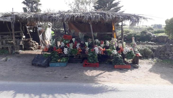 خضر و ألوان من أنامل مزارع فنان (مسابقة الصحفيين الشباب )