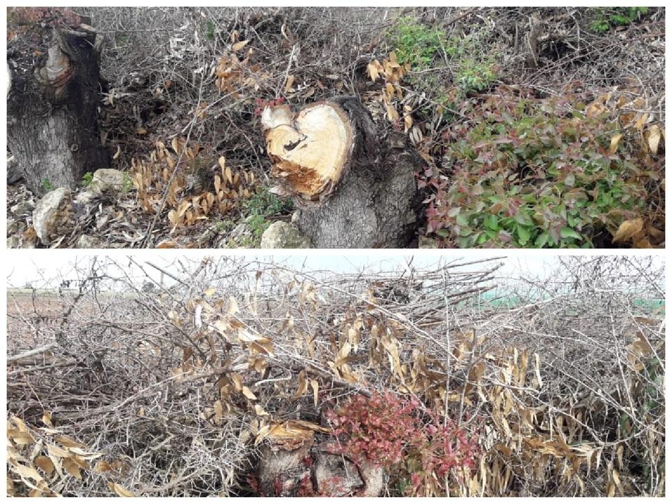 جمعويون يطالبون بفتح تحقيق في قطع ازيد من 7000 شجرة بضيعة فلاحية بضواحي البئر الجديد