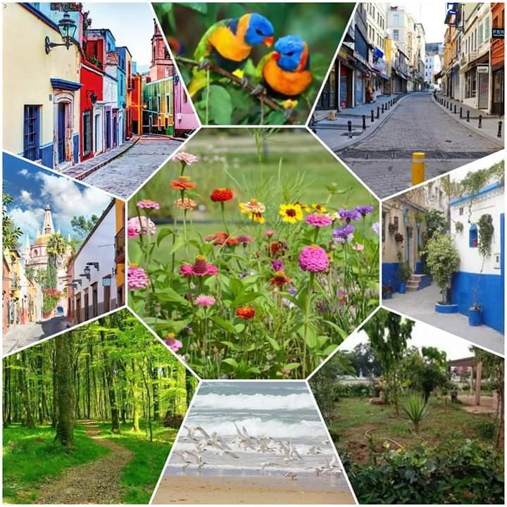الفوسفاط يدعم الجمعيات المهتمة بحمايةالبيئة والمحافظة على جمالية الأحياء بالجديدة