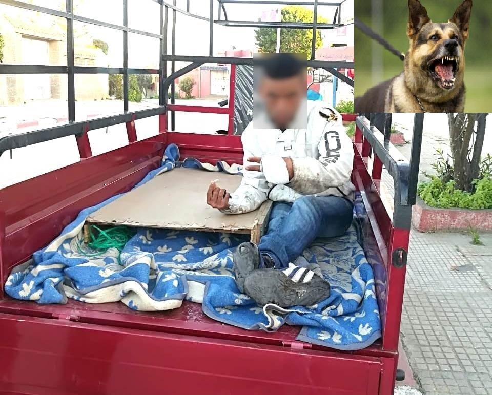 كلاب شرسة يحرضها أصحابها على المارة بأزمور.. وهيئة حقوقية تستنكر