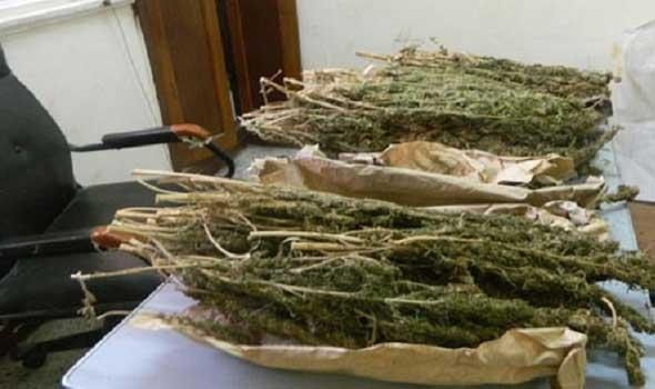 درك اثنين شتوكة يلقي القبض على مبحوث عنه ويحجز أزيد من 130 كلغ من الكيف وسنابل التبغ