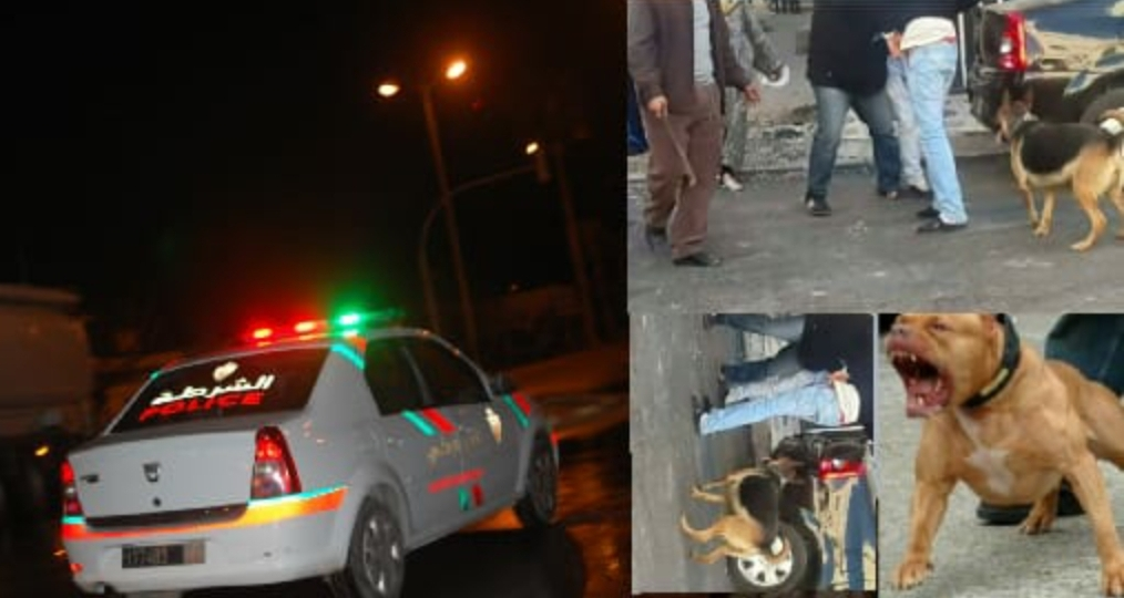 بعد استعانته بالكلاب الشرسة..  مجرم خطير يفر من قبضة الشرطة بمدينة البئر الجديد مباشرة بعد توقيفه