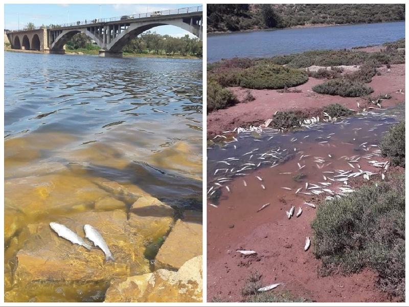 نفوق الأطنان من الأسماك على جنبات نهر أم الربيع واتهامات لمعاصر الزيتون بتلويث المياه والتسبب في الكارثة