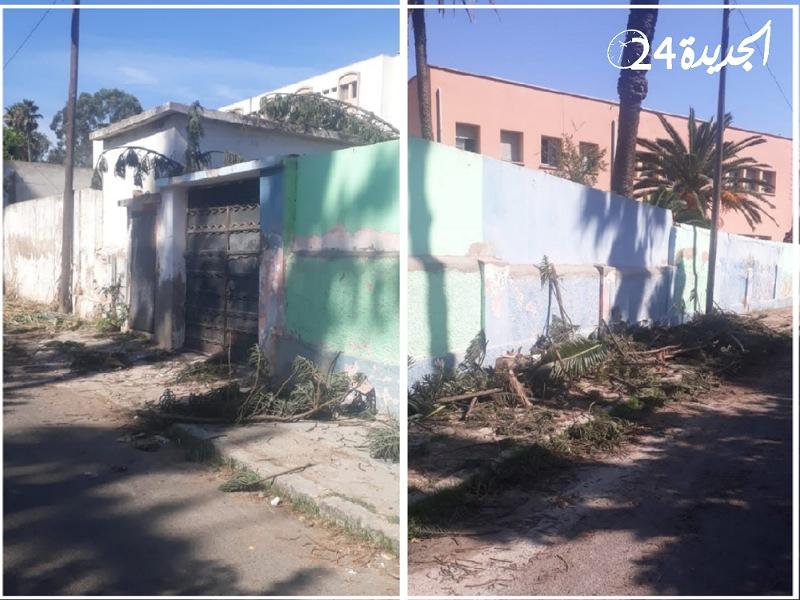 جريمة بيئية بالجديدة.. السلطات توقف عملية  اجتثات ضخمة للاشجار داخل بنايات تابعة لمديرية التعليم